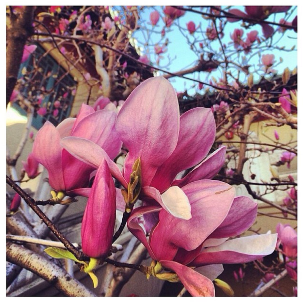 pslilyboutique, instagram, fresh pink blossoms