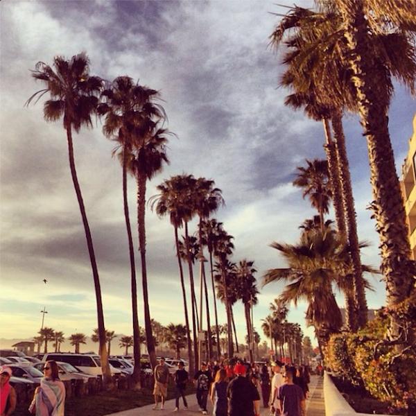 Venice beach, palm trees, sky, instagram-pslilyboutique